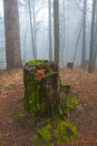 Stump in a misty forest Royalty Free Stock Photos