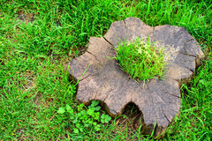 Stump with moss in grass Stock Photo