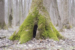 Stump with moss. In wood Stock Image