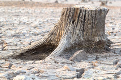 Stump mummified Stock Photography