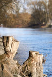 Stump in the near of a river Royalty Free Stock Photo