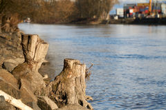 Stump in the near of a river Royalty Free Stock Images