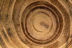 Stump of oak tree felled. Macro shot of stump of oak tree felled - section of the trunk with annual rings Stock Photos