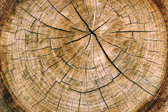 Stump of oak tree felled - section of the trunk with annual. Rings Stock Image