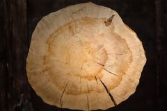 Stump of oak tree felled. Section of the trunk with annual rings Royalty Free Stock Photos