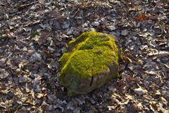 Stump of oak tree Stock Photography