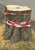Stump Of A Tree Stock Photos
