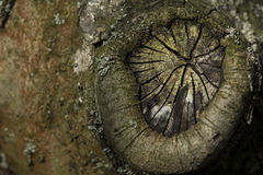 Stump. Old stump on fruit tree with lichens Stock Image