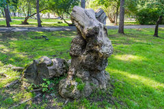 Stump of an old knotty tree Stock Photos