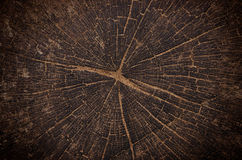 Stump of old oak tree felled. Section of the trunk with annual rings Stock Photo