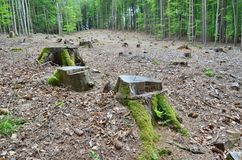 Stump of an old tree felled, South Bohemia Stock Photos