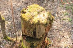 Stump overgrown with moss stock photo