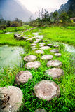 Stump path in Zhangjiang Scenic Spot,Libo,China Royalty Free Stock Photos