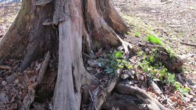 Stump with plants on a Sunny day royalty free stock photography