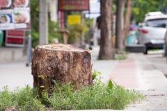 A stump Royalty Free Stock Image