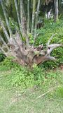 Stump. Root tree stump garden background Stock Photos