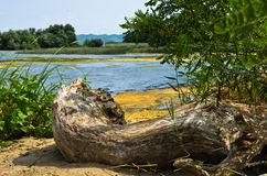 Stump in a sand at the coast of Danube river near Ram Royalty Free Stock Image