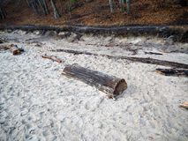 Stump in the sand Royalty Free Stock Image