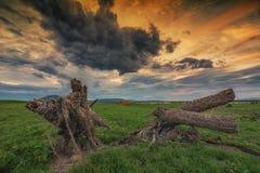 Stump settler.  Royalty Free Stock Images
