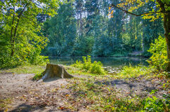 A stump on the shore. Of the lake in the Park Stock Photo