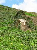 Stump on the slope in spring. Stump in the slope covered with green ivy and some blooming dandelions Royalty Free Stock Photography
