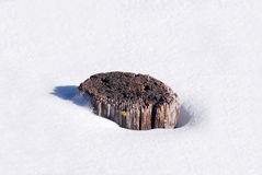 Stump in snow Royalty Free Stock Photo