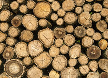 Stump stack background, texture. Stump stack background or texture Stock Image