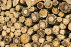 Stump stack background, texture. Stump stack background or texture Stock Photo
