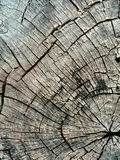 Stump structure Stock Images