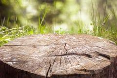 Stump sull'erba verde nella foresta Immagine Stock Libera da Diritti