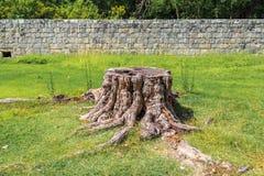 Stump sur l'herbe verte sur le fond de la maçonnerie Images stock