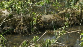 Stump in the Swamp stock footage