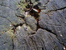 stump Textura Fundo Foto de Stock Royalty Free