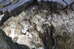 Stump texture stock photos