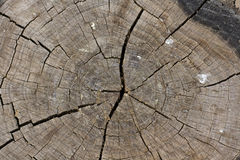 Stump texture Stock Photography