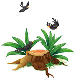 A stump with three black birds. Illustration of a stump with three black birds  on a white background Royalty Free Stock Photo