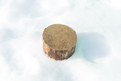 The stump of a tree with annual rings in the snow. Royalty Free Stock Photos