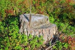 Stump of tree Stock Photo