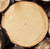 Stump of tree felled Stock Photo