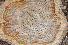 Stump of tree Stock Image