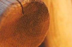 Stump of tree felled - section of the trunk with annual rings Stock Photos
