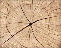 Stump of tree felled. Section of the trunk with annual rings Royalty Free Stock Images
