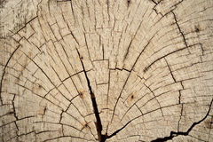 Stump of tree felled - section of the trunk with annual rings Stock Image