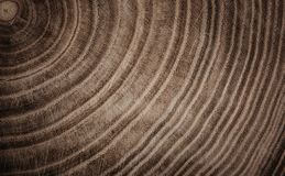Stump of tree felled - section of the trunk with annual rings. Royalty Free Stock Image