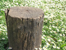 Stump tree Stock Photography