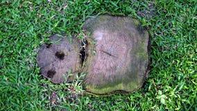Stump tree plant on green field. Thailand Stock Photo