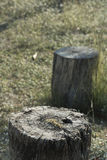 Stump tree plant on green grass Royalty Free Stock Image