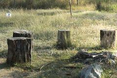Stump tree plant on green grass Stock Image