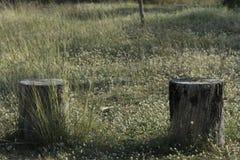 Stump tree plant on green grass Stock Photo