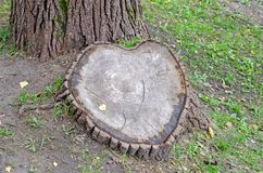 Stump. A tree in the shape of a heart. stock image